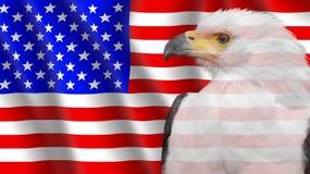 USA flag with a Bald Eagle. Bald Eagle on an American flag Stock Images