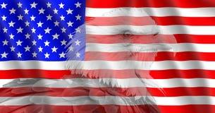 USA flag with a Bald Eagle. Bald Eagle on an American flag Royalty Free Stock Image