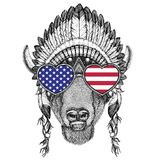 USA Flag Glasses Buffalo, Bison,ox, Bull Wild Animal Wearing Indian Hat Stock Image