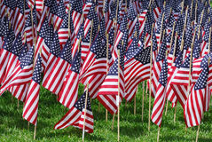USA flags. Groups of USA flags on the lawn Royalty Free Stock Photo