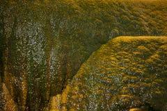 USA - Geysir Lizenzfreie Stockfotografie