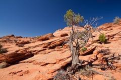 USA - kojotów buttes - falowa formacja Fotografia Royalty Free