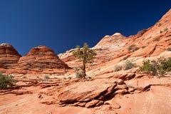 USA - Kojote Buttes - die Wellenbildung Lizenzfreie Stockfotos