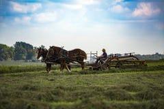 USA - Ohio - Amish Arkivbild
