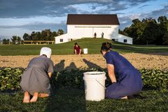 USA - Ohio - Amish stock image