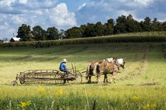 USA - Ohio - Amish royalty free stock images