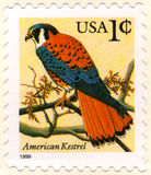 USA One Cent Postage Stamp. United States of America one cent stamp featuring the American Kestrel.  Stamp was issued in 1999 Royalty Free Stock Photography