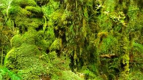 USA parki narodowi, Olimpijski park narodowy, Waszyngton obrazy royalty free