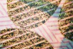 USA pieniądze pod mikroskopem stronniczo z ostrości, ostrość punkt na centrum Zdjęcie Stock