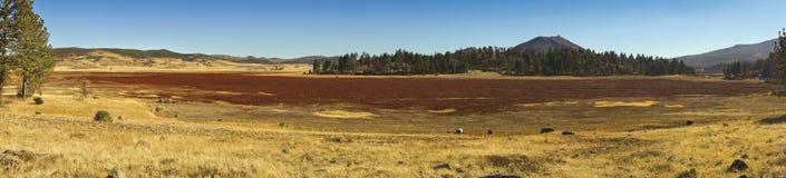 USA plattar till den breda panorama- landskapCuyamaca Rancho delstatsparken San Diego County arkivfoton