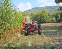 USA Vermont: Bitande frodig Vermont havre Royaltyfri Fotografi