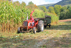 USA, Vermont: Cutting Corn Stock Image