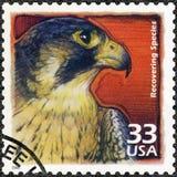 USA - 2000: visa den Peregrine falken, återställning av hotade arter, serie firar århundradet, 90-tal Arkivfoto