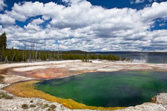 USA - Yellowstone NP royaltyfria foton