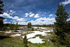 USA - Yellowstone NP arkivfoto