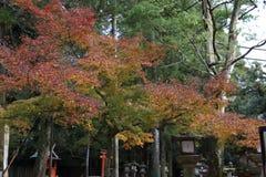 usage spécial d'Automne-feuillage, érables au Japon photo libre de droits