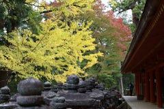 usage spécial d'Automne-feuillage, érables avec le temple au Japon images stock