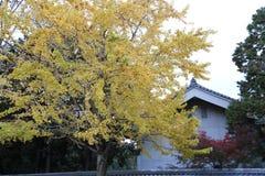 usage spécial d'Automne-feuillage, érables avec le temple au Japon photo stock