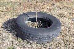 Usando la pisada vieja rueda para proteger los árboles y los arbustos landscaping fotos de archivo