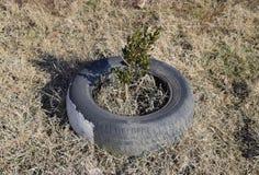 Usando la pisada vieja rueda para proteger los árboles y los arbustos landscaping foto de archivo libre de regalías