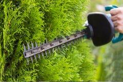 Usando un condensador de ajuste de seto para arreglar los arbustos fotografía de archivo libre de regalías