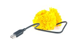 usb cable and marigold flower Royalty Free Stock Photography