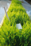 USB Wi Fi Adapter in green grass Stock Images