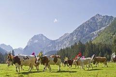 Uscita del bestiame Immagini Stock