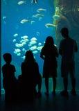 Uscita della famiglia all'acquario Immagine Stock Libera da Diritti