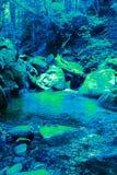 Uscita delle alghe della clorofilla nell'era primaria fotografia stock