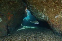Uscita di un mar Mediterraneo subacqueo del pesce della caverna fotografia stock