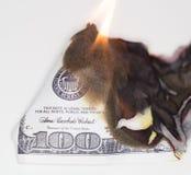 100 USD烧伤 库存图片