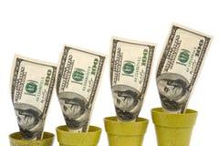 USD поднимая на белизну Стоковое Изображение