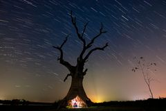Dead tree and star tail. Use low speed shutter for shoot star tail many picture and merge with picture base stock images