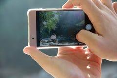 Use o telefone celular para capturar a situação a eficazmente foto de stock royalty free