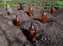 Use ochraniać rozsady przy ich lato chałupą klingeryt butelki obraz royalty free