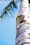 Use trunks of palm trees for telecommunications Royalty Free Stock Photography