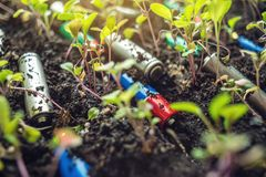 Used alkaline batteries lie in the soil where plants grow. Concept of environmental pollution with toxic household waste. Used alkaline batteries lie in the soil royalty free stock images