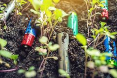 Used alkaline batteries lie in the soil where plants grow. Concept of environmental pollution with toxic household waste. Used alkaline batteries lie in the soil royalty free stock photo
