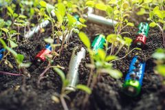 Used alkaline batteries lie in the soil where plants grow. Concept of environmental pollution with toxic household waste. Used alkaline batteries lie in the soil royalty free stock image