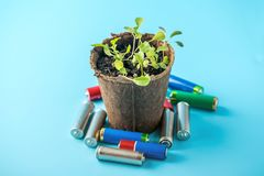 Used alkaline batteries lie with sprouted green plants. Concept of environmental pollution with toxic household waste. Used alkaline batteries lie with sprouted royalty free stock photography