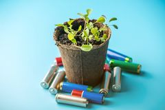 Used alkaline batteries lie with sprouted green plants. Concept of environmental pollution with toxic household waste. Used alkaline batteries lie with sprouted royalty free stock image