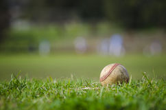 Used baseball on fresh green grass Royalty Free Stock Photo