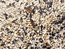Used bullet casings. Used bullet casings on the ground at a shooting range. Variety of steel and brass casings Stock Photo