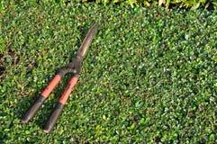 Used grasses scissor put on bush Stock Photo
