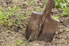 Used shovel stuck in the soil Stock Image