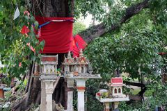 Used spirit House from people house dropped under the big sacred fig tree. stock photo
