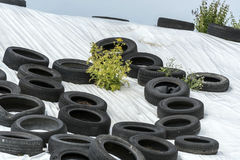 Used tires with green plants on a white hill under storm clouds Royalty Free Stock Photos