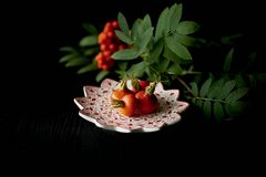 Useful antioxidant rosehip and lying on a platter on a dark background.Framed by the ash. Healthy eating during Royalty Free Stock Images