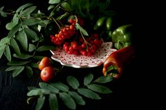 Useful antioxidant rosehip and lying on a platter on a dark background.Framed in ash , red and green . Healthy eating Stock Photos